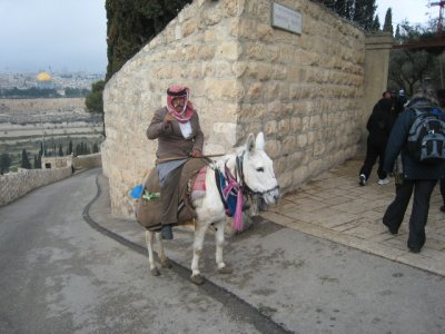 Donkey on Road from Mt of Olives